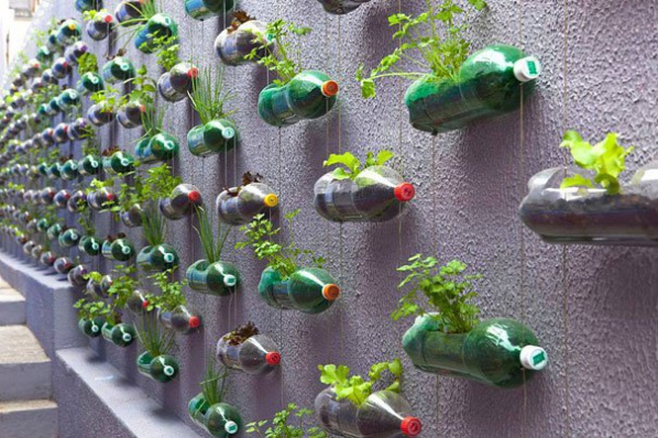 Mur végétal bouteilles en plastique