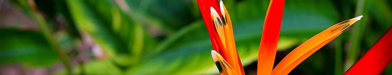 Secrets de beauté à travers le monde - Brésil