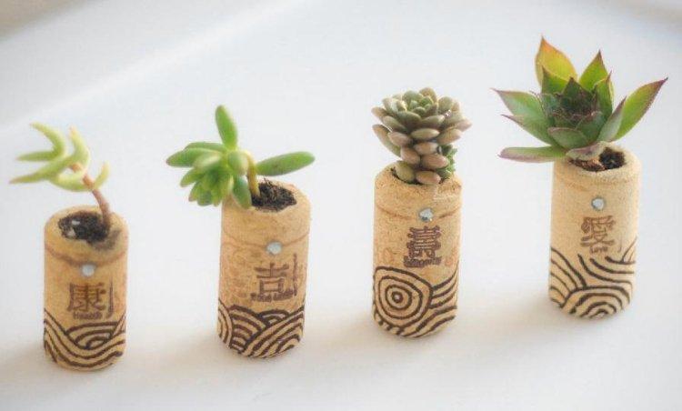 Bouchon en liège pot plantes succulentes