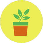 Ecogeste #2 Récupérer l'eau pour arroser les plantes