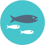 Ecogeste #11 Ne pas acheter de poissons en voie de disparition