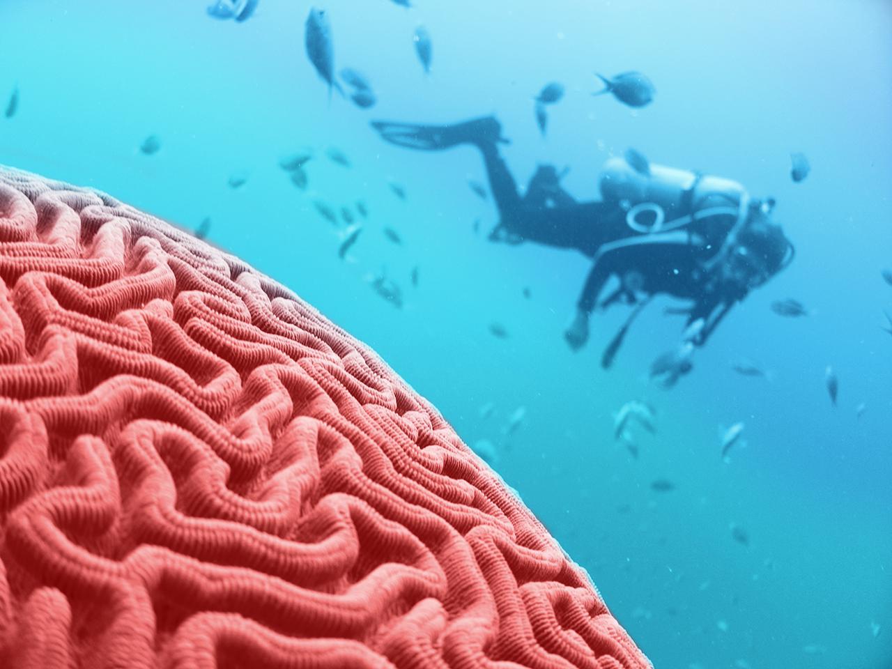 Comprendre son cerveau pour mieux dépasser ses peurs